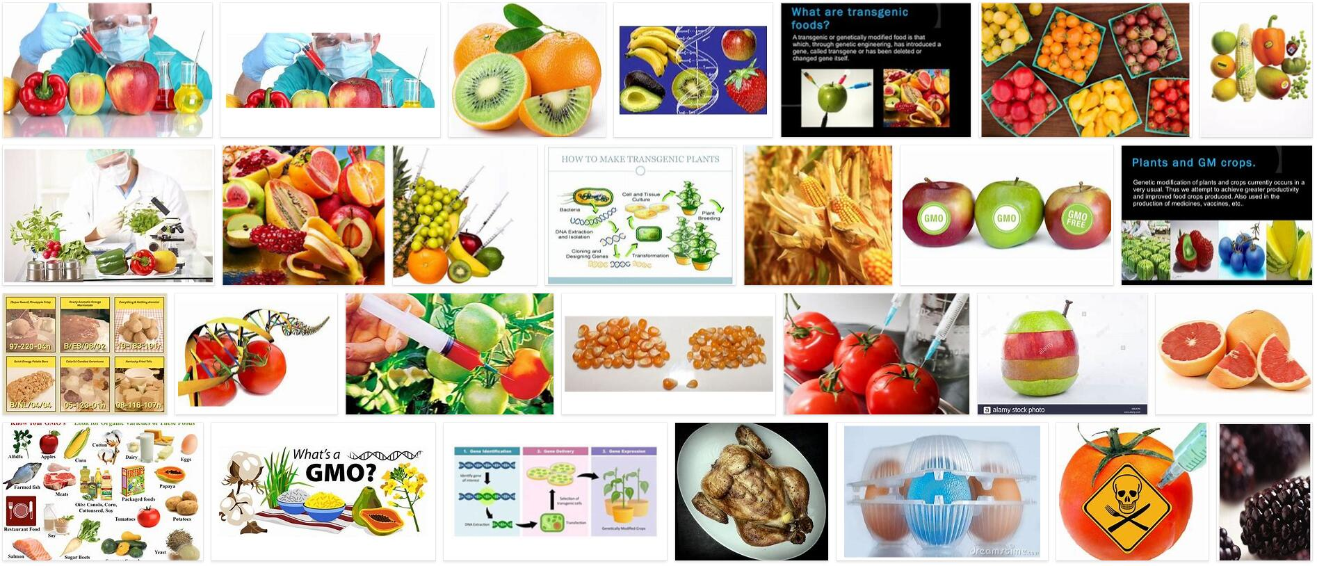 Meaning of Transgenic Foods in English