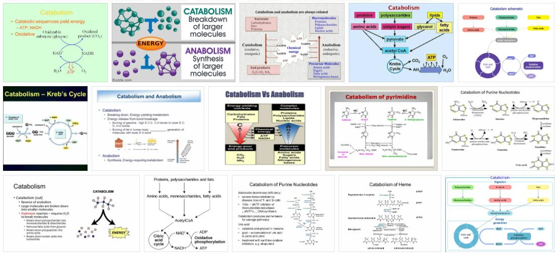 Meaning of Catabolism in English