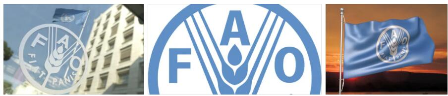 Meaning of FAO in English